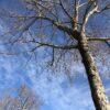 冬の日の空